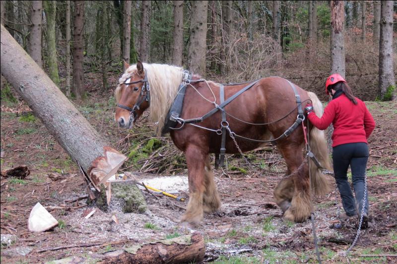 Des travailleurs spécialisés : les chevaux de traction ont dû attendre quoi pour travailler ?