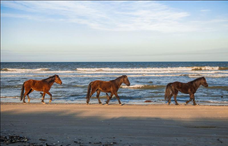 Un vocabulaire étonnant : où se situe le canon sur le cheval ?