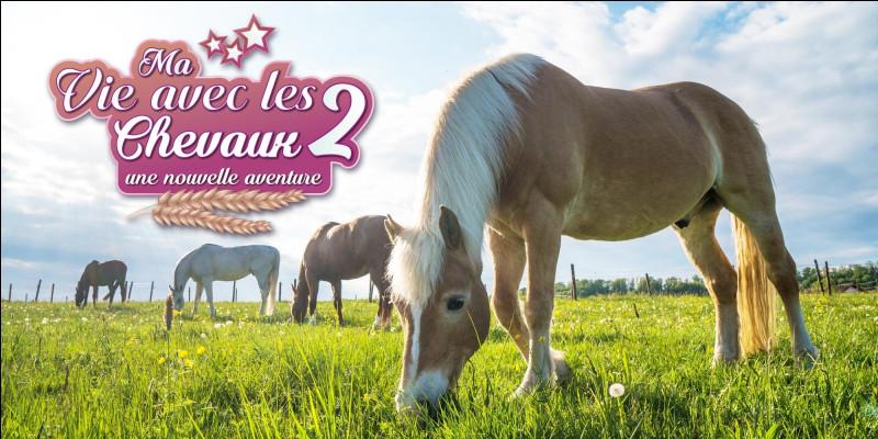 Un vocabulaire étonnant : comment savons-nous qu'un cheval est gris et non blanc ?