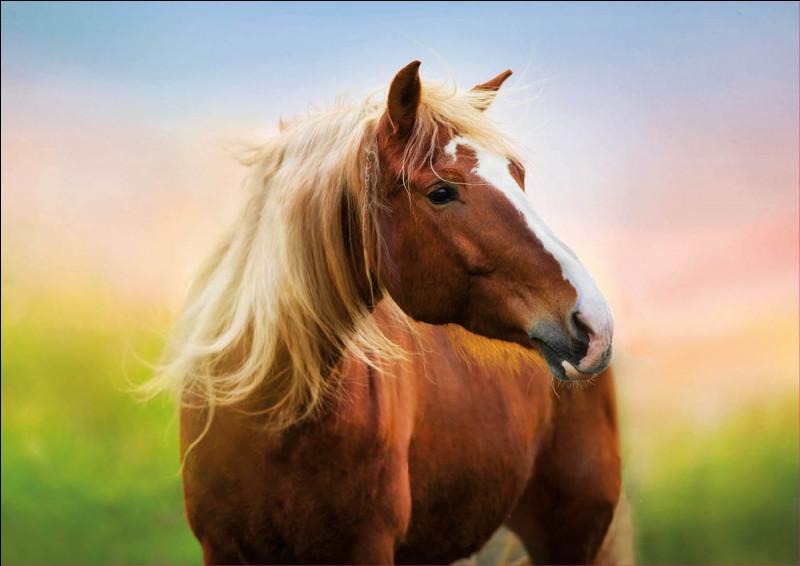 Les ancêtres du cheval : comment appelle-t-on le premier cheval mesurant 35 cm ?