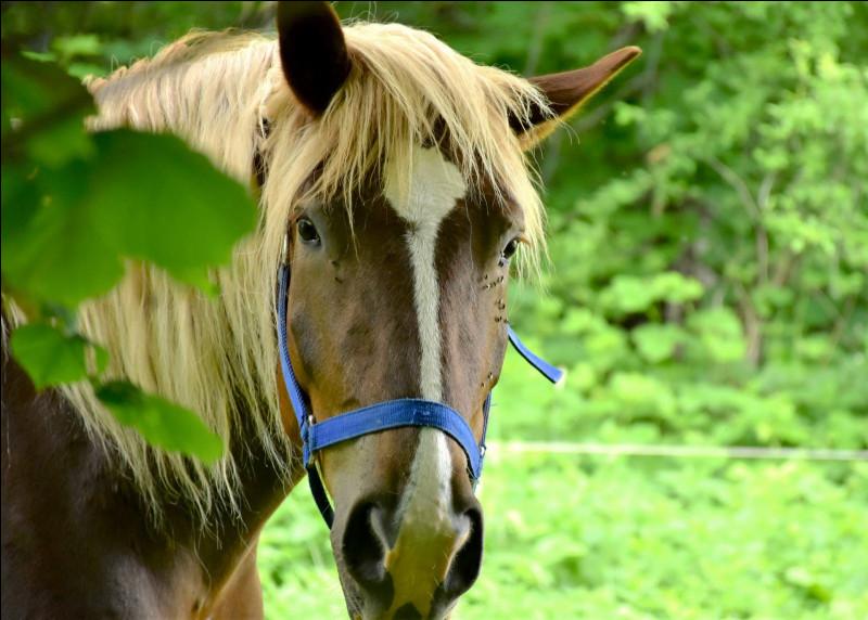Les ancêtres du cheval : quel était le premier cheval à mesurer 1 m20 ?