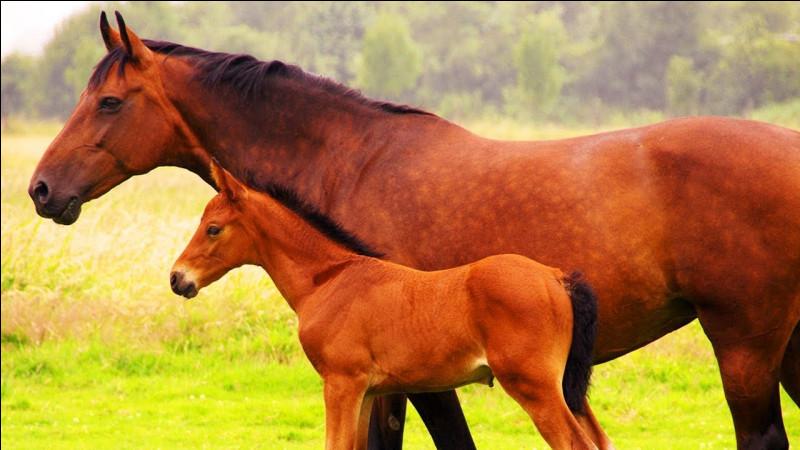 """Vivre en troupeau : que signifie """"la mère de tous"""" dans un troupeau ?"""