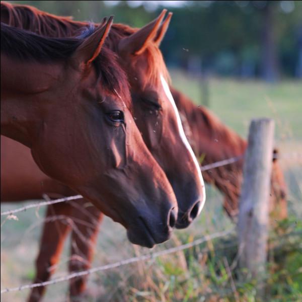 Entre amis : que signifie le fait que deux chevaux se grattent la croupe entre eux ?