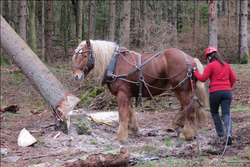 Chassés et transformés : pendant la préhistoire le cheval n'était qu'une...