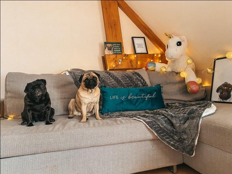 Comment s'appellent les chiens de Pidi et Valouzz ?