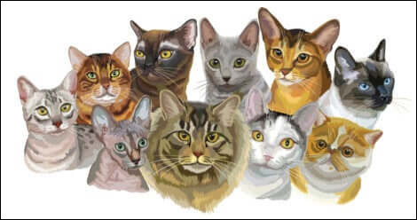 Combien y a-t-il de races de chats ?