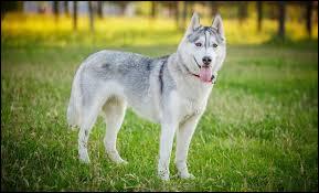 Quelle est la durée de vie des chiens ?