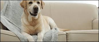 Pour que ton chien soit bien dressé, quand il monte sur le canapé, il faut :