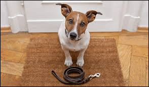 En moyenne combien de fois par jour un chien doit-il sortir ?