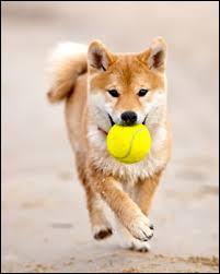 Comment un chien t'invite-t-il à jouer ?