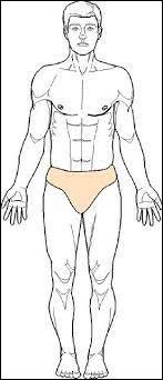 Pourquoi doit-on utiliser la position anatomique de référence ?