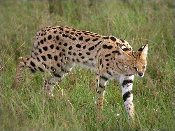 Quizz animaux africains quiz animaux - Animaux savane africaine ...