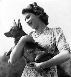 Une question plus compliquée : comment se nomme le chien, de race Corgi Pembroke, qu'on lui offrit pour ses 18 ans ?