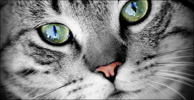 Les yeux ... du chat nous regardaient fixement d'un air étonné.