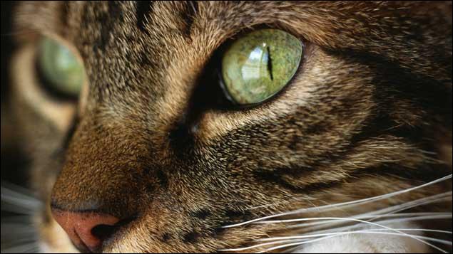 Ses yeux ... nous regardaient fixement. Le félin était toujours aussi étonné.