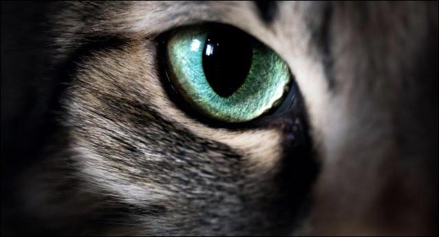 La curiosité de ce chat aux yeux ... est un vilain défaut.