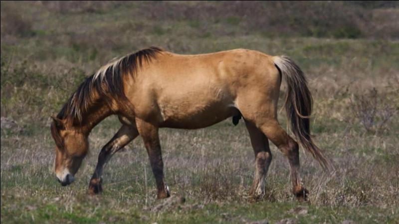 Quelles races de cheval excellent en dressage ?