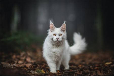 Il est conseillé de l'emmener chez le vétérinaire tous les 6 ou 12 mois.