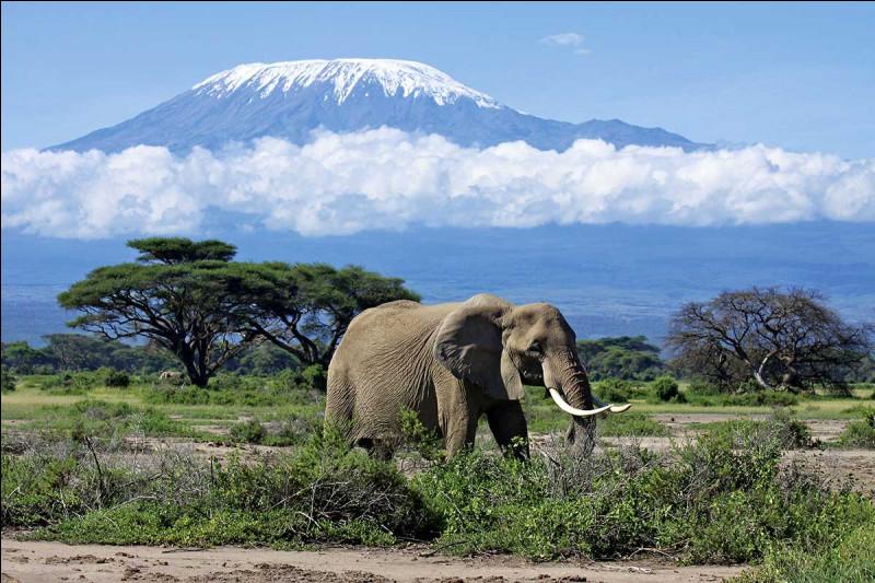 Le Kilimandjaro est la plus haute montagne d'Afrique (5895 m). En quelle année un parc national a-t-il été créé ?