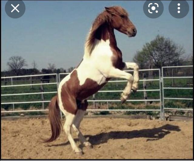 Que fait le cheval ?