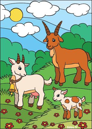 Coucou, mon chéri, dit la chèvre à son mari...