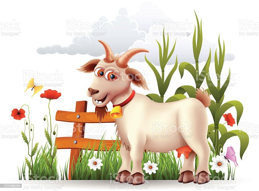 Les chèvres en délire !