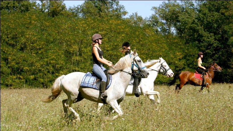 Quelle est la race des deux poneys gris ?