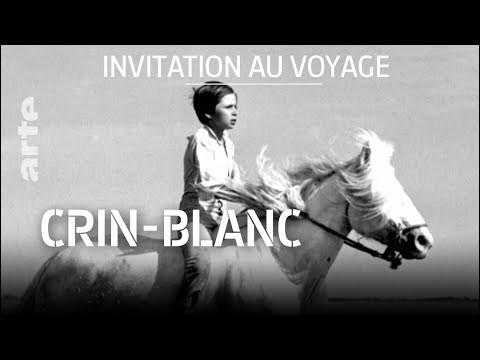 """Crin-Blanc"" est un film adapté d'un roman de Romain Gary."