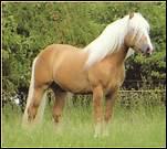 Avec quoi enlève-t-on l'excédent d'eau sur la robe du cheval ?