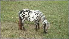 Que faut-il veiller à faire après avoir posé la selle sur le dos du cheval ?