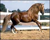 Pourquoi ne faut-il pas trop serrer la sangle quand on prépare son cheval ?