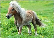 Quelle est la meilleure façon pour le cheval de monter en selle ?
