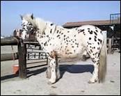 A quoi peut-on voir que les chevaux sont intelligents ( notamment ) ?