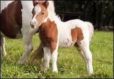 Quelle est la place de la Fédération française d'équitation parmi les fédérations sportives ?
