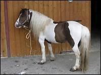 Comment appelle-t-on également les grandes Ecoles d'équitation ?