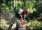 Je coupe les arbres dans la forêt, je suis...