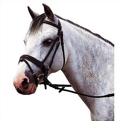 Les équipements des chevaux