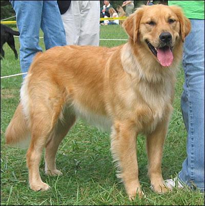 Comment appelle-t-on cette race de chien ?