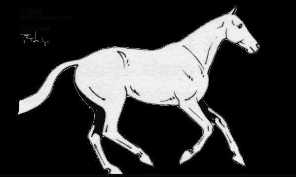 Ce cheval est au :