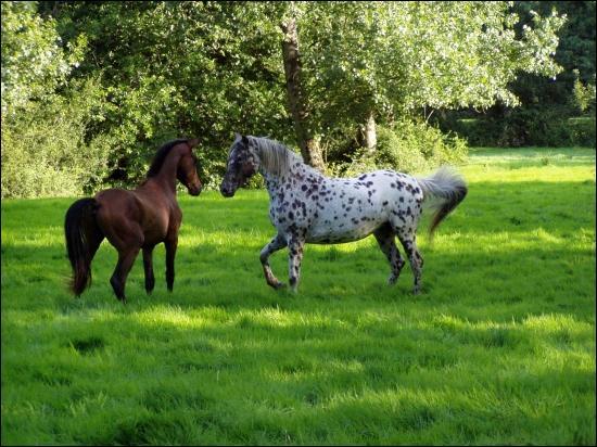 Deux cavaliers se croisent à même allure mais à contre-sens. Lequel a priorité ?