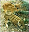 Que sont ces bébés animaux ?