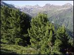 Quels sont ces arbres ?