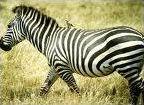Sauras-tu reconnaître ces animaux. 2. ? (quizz enfant)