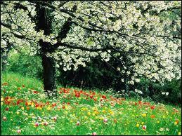 Selon un proverbe bien connu, ce petit oiseau ne fait pas le printemps...