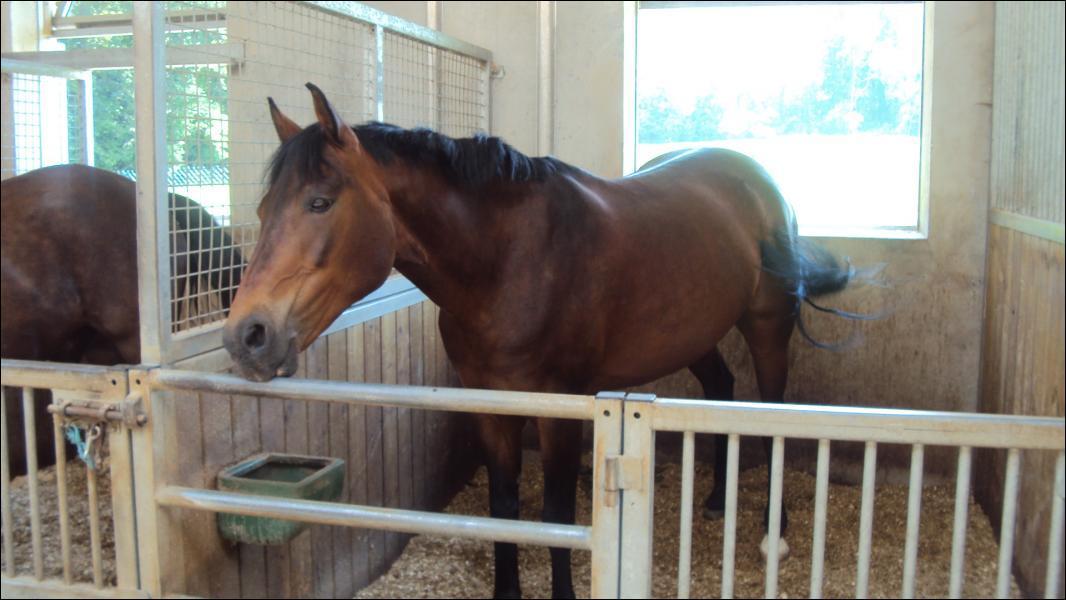 Le cheval et le poney peuvent-ils vomir ?