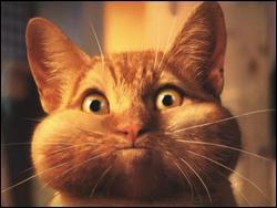 Quel animal s'amuse à gonfler ses joues ?
