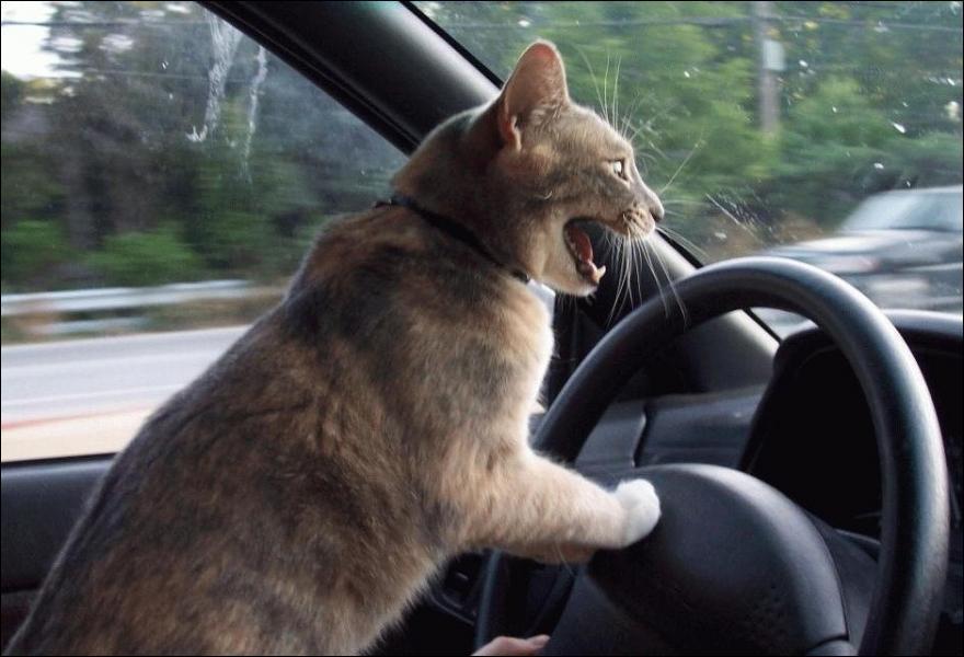 Attachez bien votre ceinture ! Quel animal est au volant ?