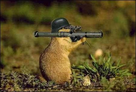 Quel est cet animal se croyant à la guerre ?