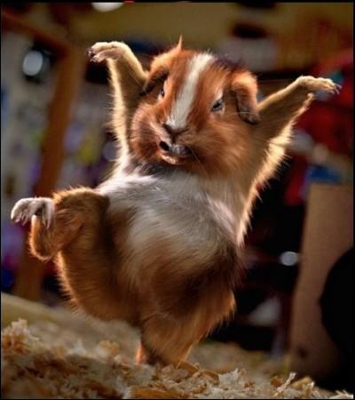 J'adore danser la java, qui suis-je ?