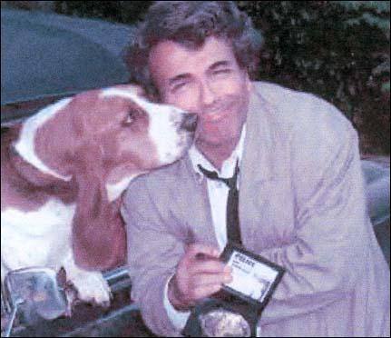 Le chien de Columbo est un basset. .